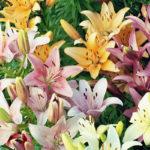 Какие цветы подарить маме на 8 Марта?