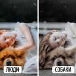 Каким видят мир кошки и собаки?
