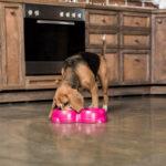 Пять основных принципов кормления собак и кошек