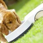 Важность белка в питании кошек и собак